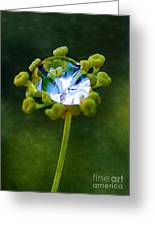 Nature's Diamond Ring Greeting Card