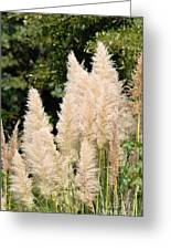 Nature's Feather Dusters Greeting Card