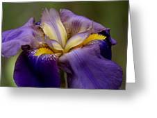 Natures Pastels Greeting Card
