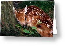 Nature's Precious Creation Greeting Card