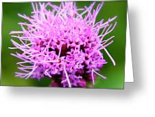 Natures Purple Greeting Card