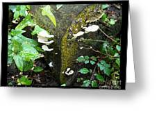 Natures Right Angle Degrees Greeting Card