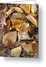 Nature's Still Life 1 Greeting Card