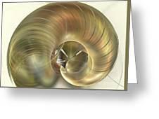 Nautilus Greeting Card