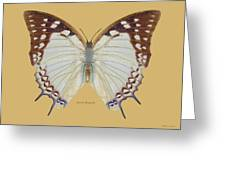 Nawab Butterfly Greeting Card