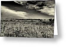 Nebraska Prairie Two In Black And White Greeting Card