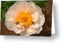 Nectar Collection Greeting Card