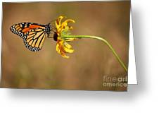 Nectar Delight Greeting Card