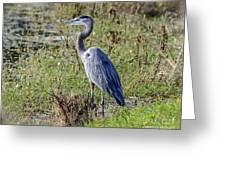Neighborhood Heron Greeting Card