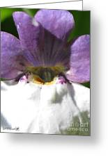Nemesia From The Tapestry Mix Greeting Card