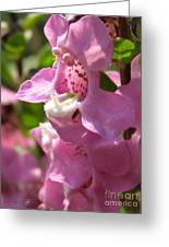 Nemesia Named Poetry Lavender Pink Greeting Card