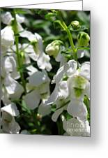Nemesia Named Poetry White Greeting Card