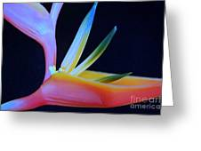 Neon Heliconia Greeting Card