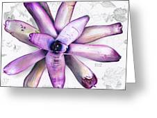 Neoregelia Kawiki Greeting Card by Penrith Goff