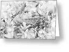 Nest In Black And White Greeting Card