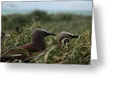 Nesting On Michaelmas Cay Greeting Card