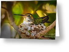 Nesting Greeting Card
