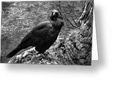 Nevermore - Black And White Greeting Card