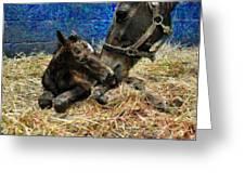 New Born Foal Greeting Card