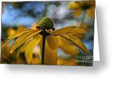 New Cone Flower Greeting Card
