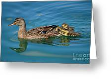 New Family Ducks Greeting Card