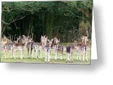 New Forest Deer Greeting Card by Karen Grist