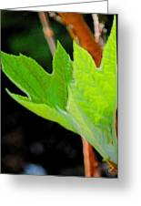 New Growth Two Greeting Card