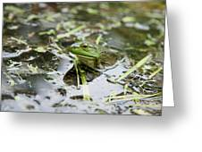 New Hampshire Frog Greeting Card