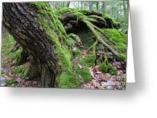 New Hampshire Usa Forest Greeting Card