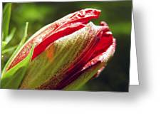 New Hibiscus Greeting Card