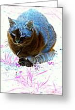 New Kitty Blue Greeting Card
