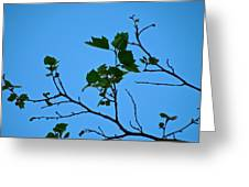 New Leaves Greeting Card