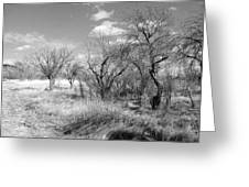 New Mexico Series - Bare Beauty Greeting Card