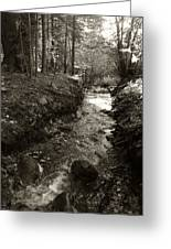 New Mexico Series - Late Winter Streambed Greeting Card