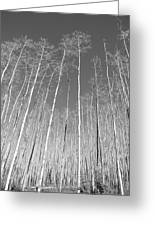 New Mexico Series - Leaf Free Black And White Greeting Card