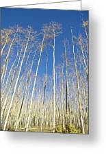 New Mexico Series - Leaf Free On The Mountain Greeting Card