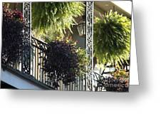 New Orleans Afternoon Light Greeting Card
