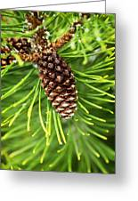 New Pine Greeting Card