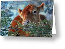 New Years Morning Cow Greeting Card