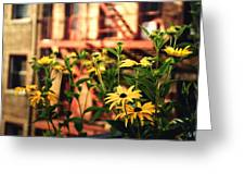 New York City Flowers Along The High Line Park Greeting Card