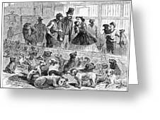 New York: Dog Pound, 1866 Greeting Card