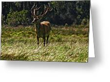 New Zealand Elk Greeting Card
