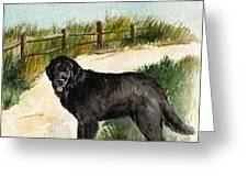 Newfie  Greeting Card