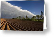 Newly Planted Potato Field And Clouds Greeting Card