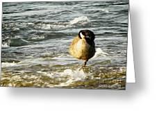 Niagara Duck Greeting Card