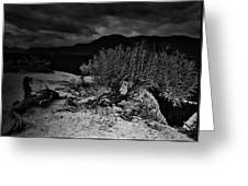 Nieve Of Adam Greeting Card