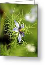 Nigella Flower Greeting Card
