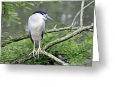 Night Heron On Branch Greeting Card