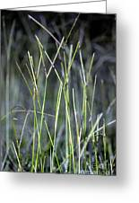 Night Walk Through The High Grass Greeting Card