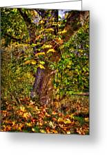 Nisqually Wildlife Refuge P12 The Maple Tree Greeting Card